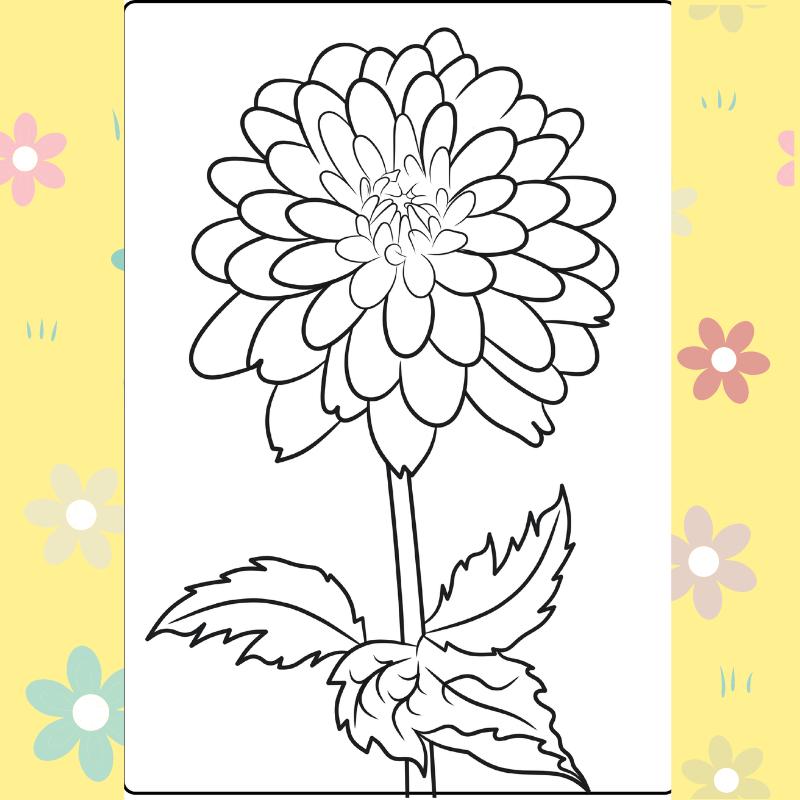 Dahlia coloring page