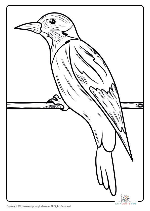 Bird Coloring Pages: From our bird coloring book, this page features a Jay Bird coloring page.