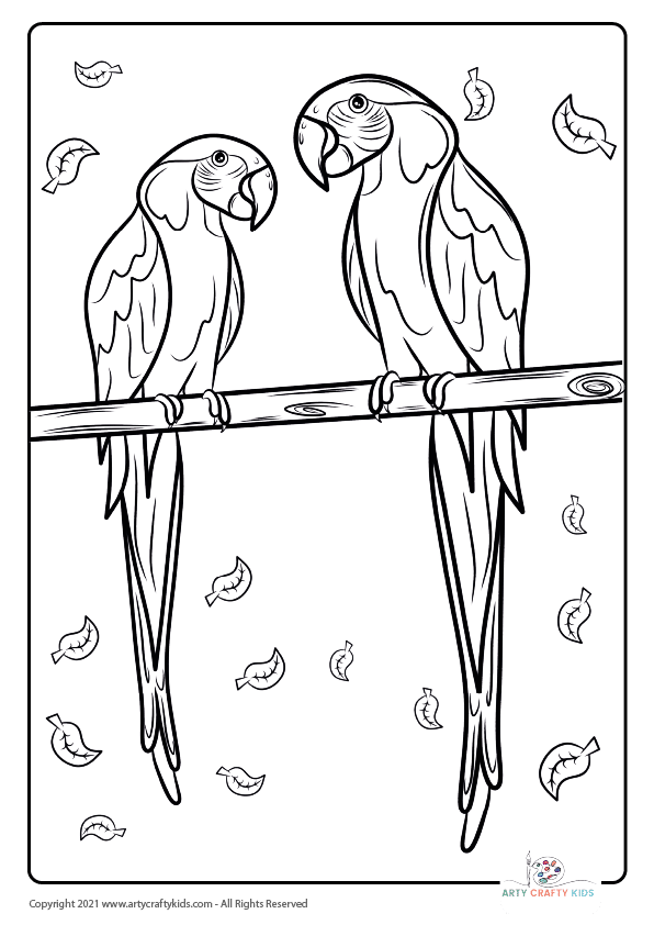 Bird Coloring Pages: From our bird coloring book, this page features a Macaw Parrot coloring page.