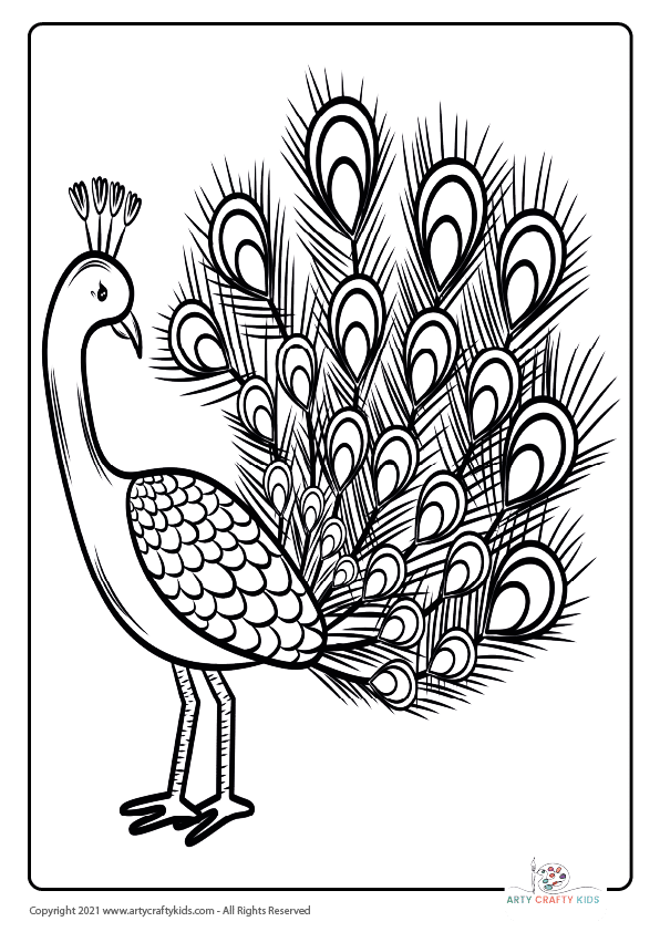 Bird Coloring Pages: From our bird coloring book, this page features a Peacock coloring page.